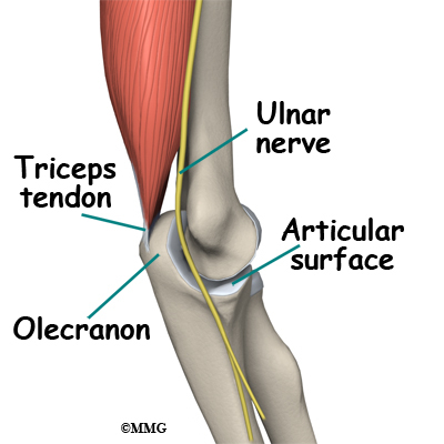 Adult Olecranon Elbow Fractures Midwest Bone And Joint Institute