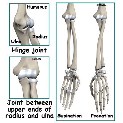 Adult Forearm Fractures - Midwest Bone and Joint Institute - Illinois