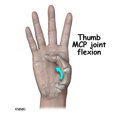 thumb of Mp joint the
