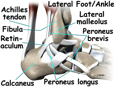 a patient's guide to ankle anatomy | houston methodist, Human Body