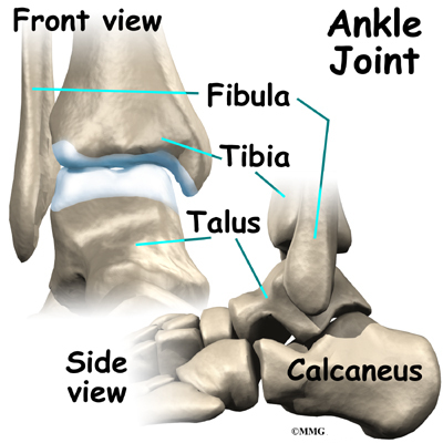 Osteoarthritis Of The Ankle Orthogate