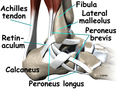 Peroneal Tendon Problems | Orthogate