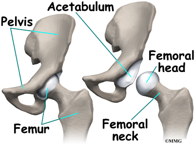 ball and socket joint. the hip joint is a true ball-and-socket joint. bones of are femur (the thighbone) and pelvis. top end shaped like ball socket s