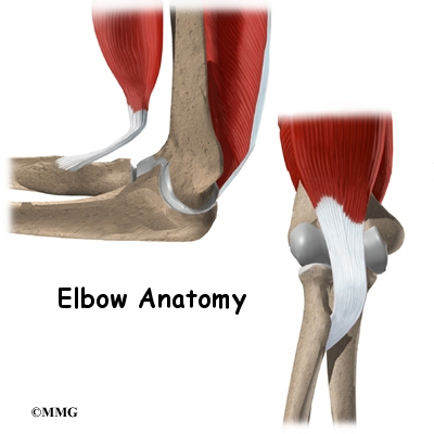 A Patients Guide To Elbow Anatomy Houston Methodist