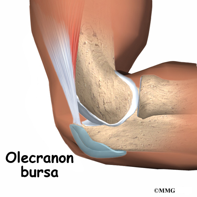 Patient education concord orthopaedics or point of the elbow called the olecranon and the overlying skin this bursa allows the elbow to bend and straighten freely underneath the skin ccuart