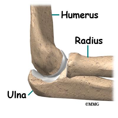 Splint likewise Lower Appendicular Skeleton Diagram additionally Back ...