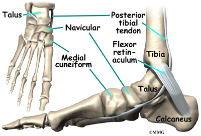 a guide to accessory navicular problems | houston methodist, Human Body