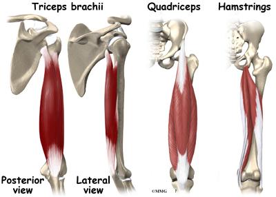 Muscle Cramps Orthopedic Surgery Algonquin Il Barrington Il Elgin Il Geneva Il