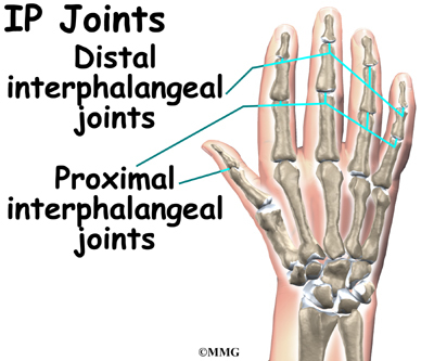 Hand Anatomy Midwest Bone Joint Institute Elgin Illinois