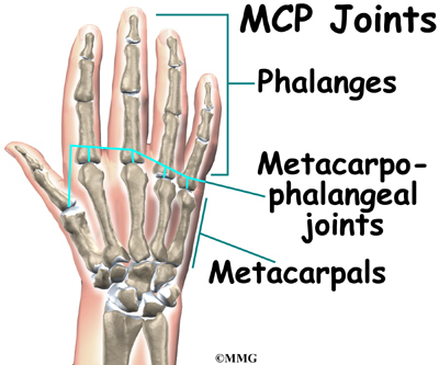 Hand Anatomy Locate Hand Parts Houston Methodist