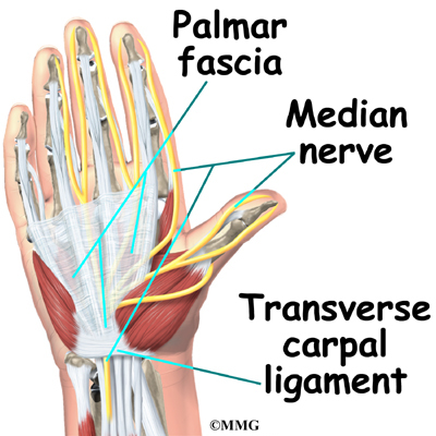 Open Carpal Tunnel Release Orthopedic Surgery Algonquin Il
