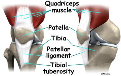 child_knee_osgood_anatomy02.jpg