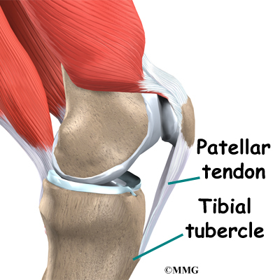 knee_acl_patellar_tendon_anatomy03.jpg