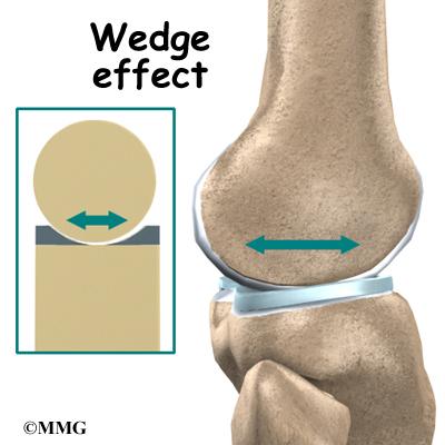Knee Joint Knee_anatomy10