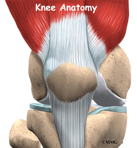 Knee Anatomy: Guide to Knee Structure | Houston Methodist