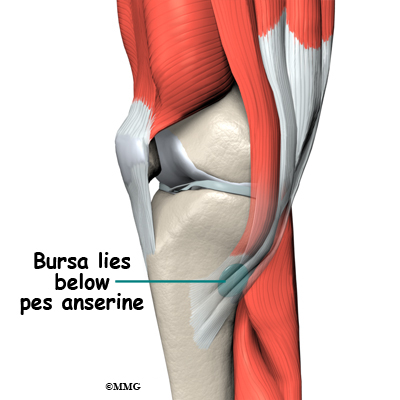 Pes anserine bursitis of the knee orthopedic surgery algonquin the pes anserine bursa provides a buffer or lubricant for motion that occurs between these three tendons and the medial collateral ligament mcl ccuart Choice Image