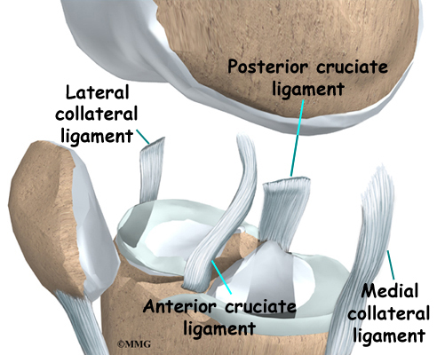 Collateral Ligament Injuries Of The Knee Houston Methodist