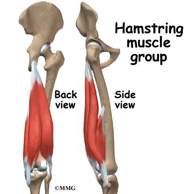 Hamstring Injuries | Orthogate