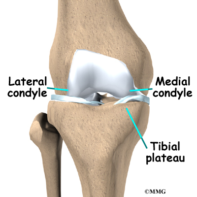 Page view article the lateral femoral condyle is on the outer half of the femur farthest from the other knee the top of the tibia bone forms a flat surface called the ccuart Choice Image