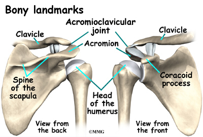 osteoarthritis of the acromioclavicular joint | orthopedics, Human Body