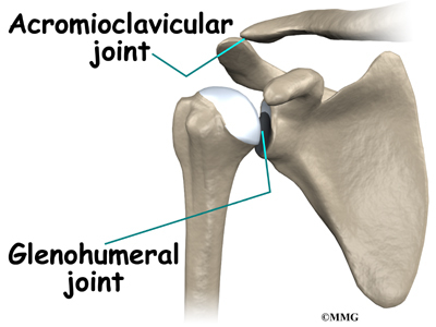 Faith Anatomy - Joints of the Shoulder