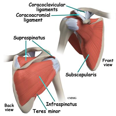 exercises for supraspinatus tendinopathy pdf ortho