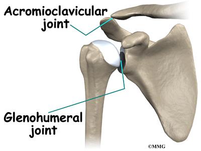 humerus bone anatomy. humerus (upper arm one),