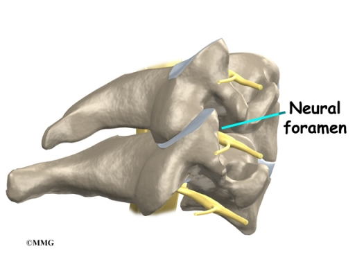 Cervical Spine Anatomy | Houston Methodist