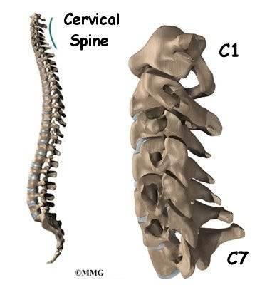 Cervical Spine Anatomy Houston Methodist