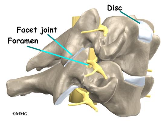 Cervical Foraminotomy Orthogate