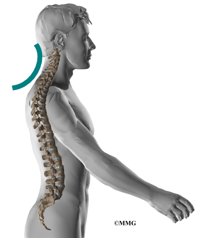 Anatomy of the neck and spine