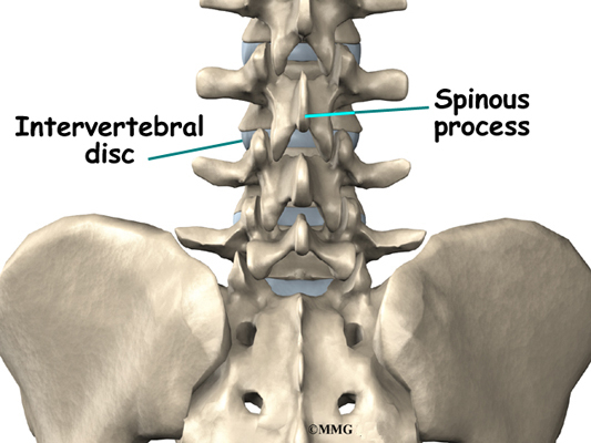 patient's guide to posterior lumbar interbody fusion - ., Sphenoid