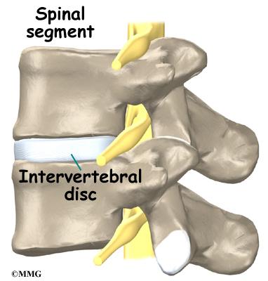 Surface anatomy lumbar spine