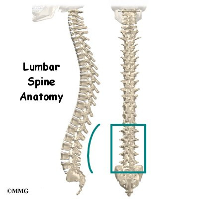 Lower Back Anatomy Houston Methodist