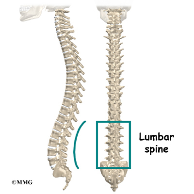 Winchester chiropractic center woburn ma the spinal column gives the body its form it is the bodys main upright support the section of the spine in the lower back is called the lumbar spine ccuart Gallery