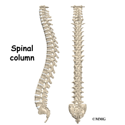 lumbar spine stenosis | houston methodist, Skeleton