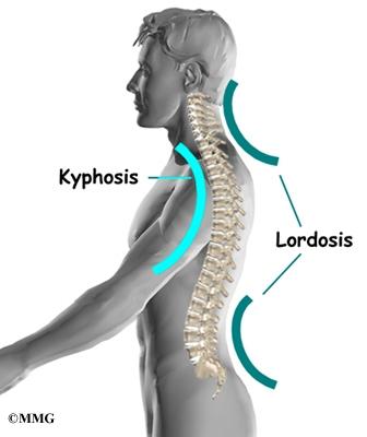 Thoracic Spine Anatomy   Orthogate
