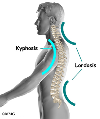 lordosis in lumbars and cervicals, kyphosis in thoracics