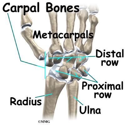 Wrist Parts Anatomy Houston Methodist