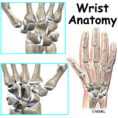 Wrist Anatomy | Orthogate
