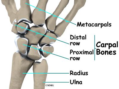 wrist_tfcc_anatomy01.jpg