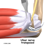 Elbow Anatomy