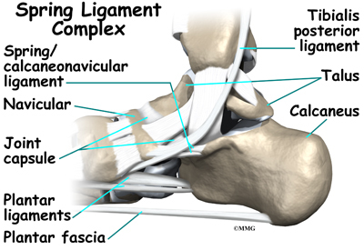 Spring Ligament Podiatry Orthopedics Physical Therapy