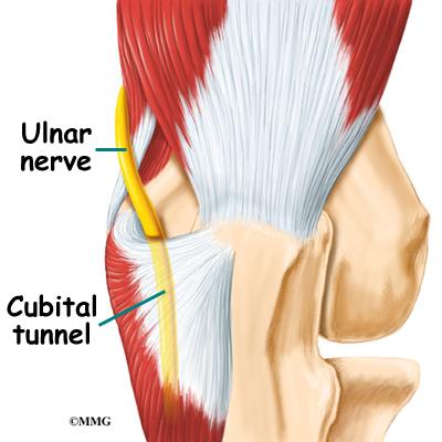 elbow_cubtun_anatomy01.jpg
