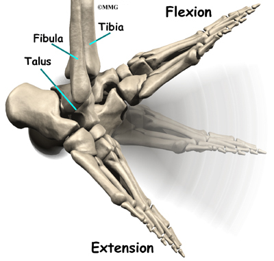 What does flexion mean in anatomy