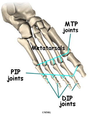 joints of the foot