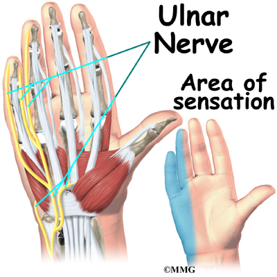 ulnar nerve - photo #1