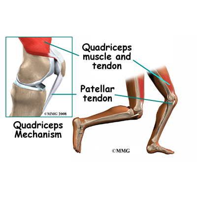 Tightening up The Quadriceps