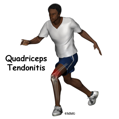 Quadriceps Muscle Exercises The Quadriceps Muscle And