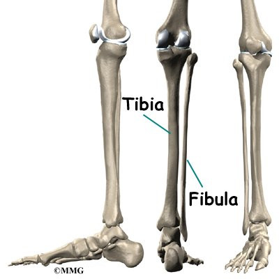 It is called the tibia...
